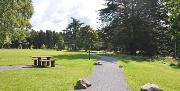 visit portumna forest while on holiday in ireland